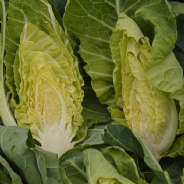 Cabbage Wintergreen - Appx 300 seeds